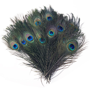 "Natural Peacock Eye Tail Feathers 10-12"" Long Beautiful Decor"